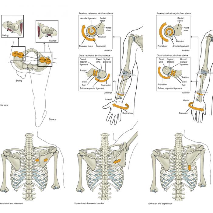 Samuel's Kinesiology II